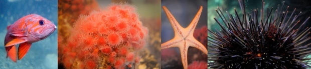 ucluelet-undersea-photos